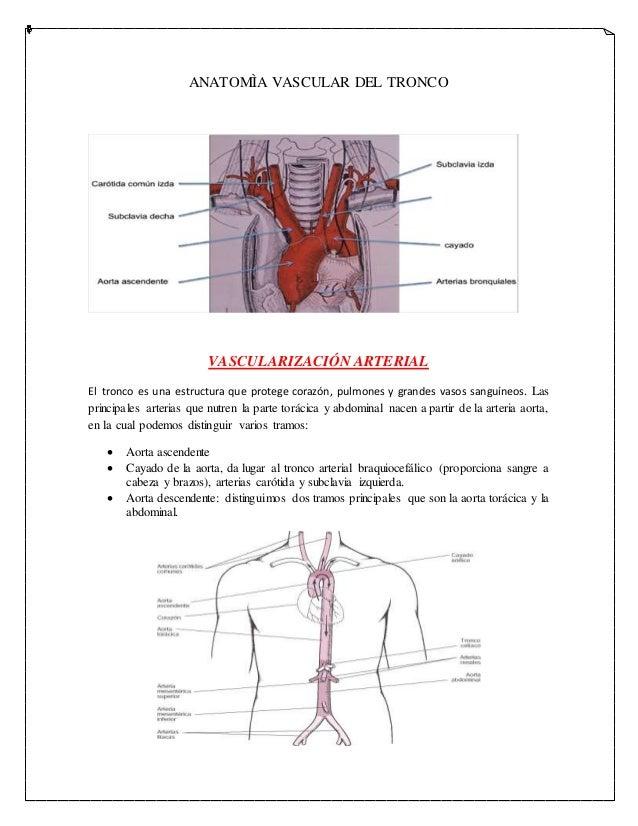 Anatomìa vascular del tronco imprimir