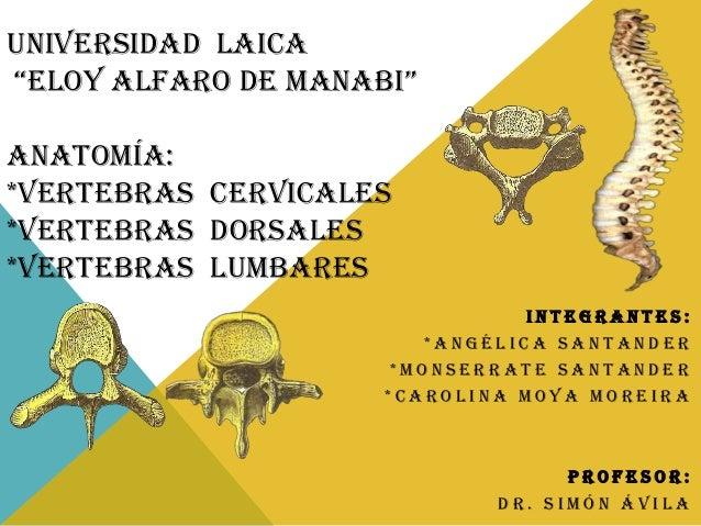 """UNIVERSIDAD LAICA """"ELOY ALFARO DE MANABI"""" ANATOMÍA: *VERTEBRAS CERVICALES *VERTEBRAS DORSALES *VERTEBRAS LUMBARES INTEGRAN..."""