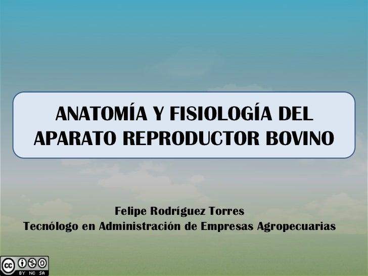 Anatomía y fesiologia aparato reproductor bovino