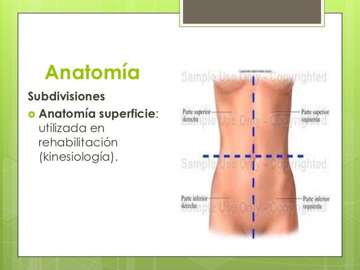 Hermosa Kinesiología Clínica Y Anatomía Ideas - Anatomía de Las ...