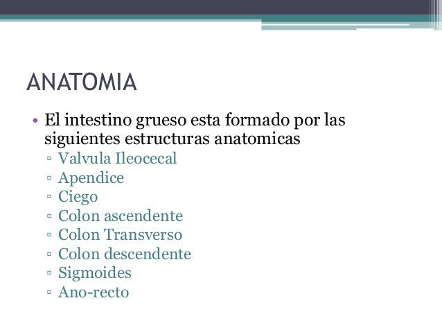 Anatomía y fisiología de colon