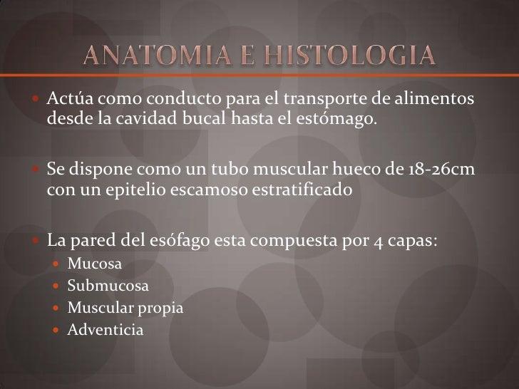 Anatomía y fisiología de esófago Slide 2
