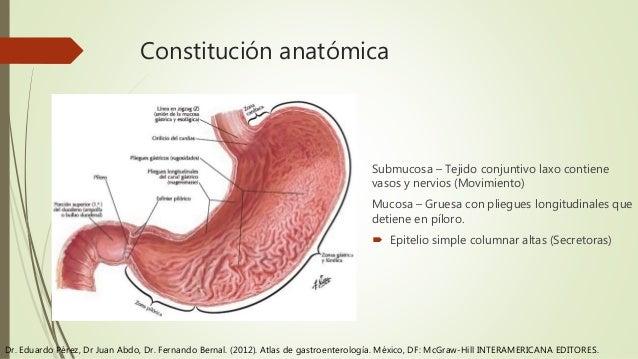 Anatomía y fisiología de estomago
