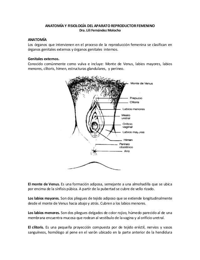 Anatomía y fisiología del aparato reproductor femenino texto