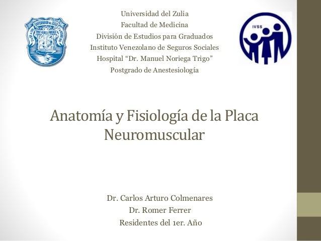 Anatomía y Fisiología de la Placa Neuromuscular Universidad del Zulia Facultad de Medicina División de Estudios para Gradu...