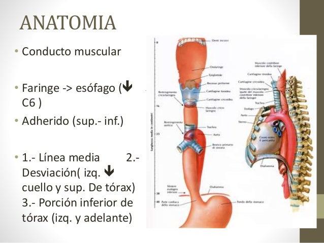Anatomía y Fisiología del Esofago. Trastornos mMotores