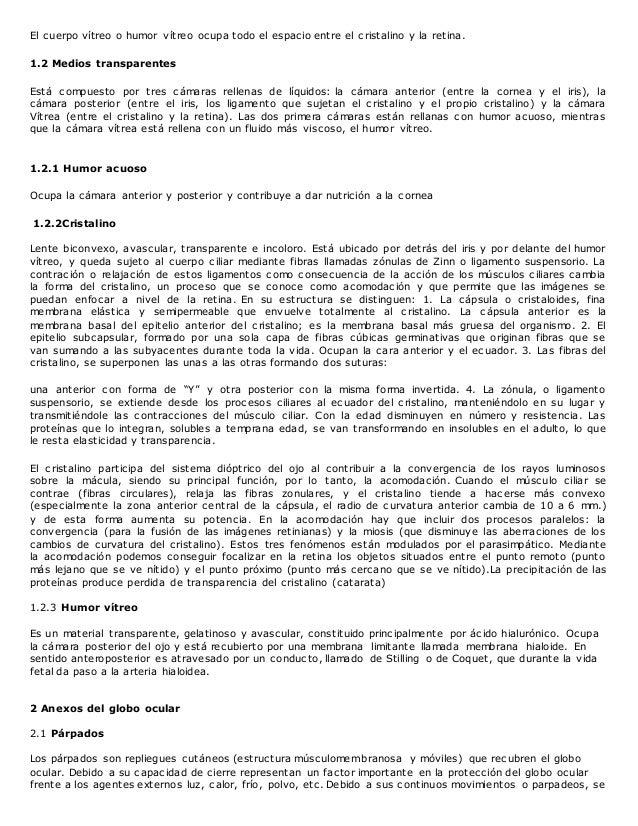 Lujo La Anatomía De Las Respuestas Fetales De Cerdo Cresta ...