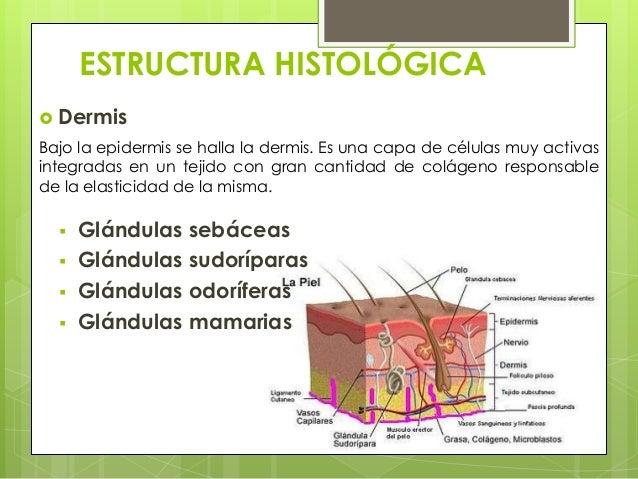 Anatomía y fisiología de los mamíferos