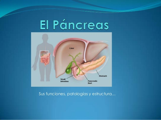 Sus funciones, patologías y estructura…