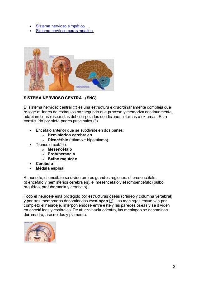 Perfecto Cómo Memorizar La Anatomía Y Fisiología Bandera - Anatomía ...