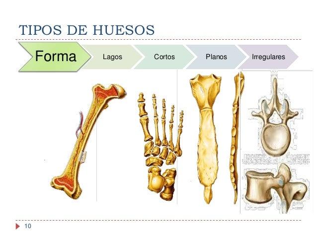 anatoma y fisiologa del sistema seo 10 638