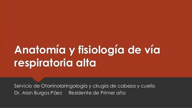 Anatomía y fisiología de vía respiratoria alta Servicio de Otorrinolaringología y cirugía de cabeza y cuello Dr. Alan Burg...