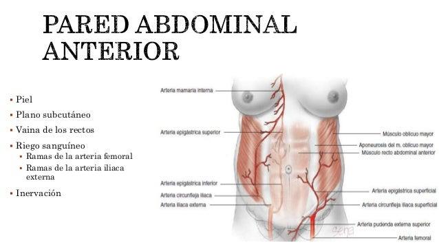 Anatomía y fisiología materna y fetal
