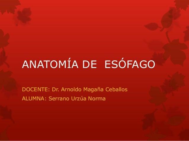 ANATOMÍA DE ESÓFAGO DOCENTE: Dr. Arnoldo Magaña Ceballos  ALUMNA: Serrano Urzúa Norma
