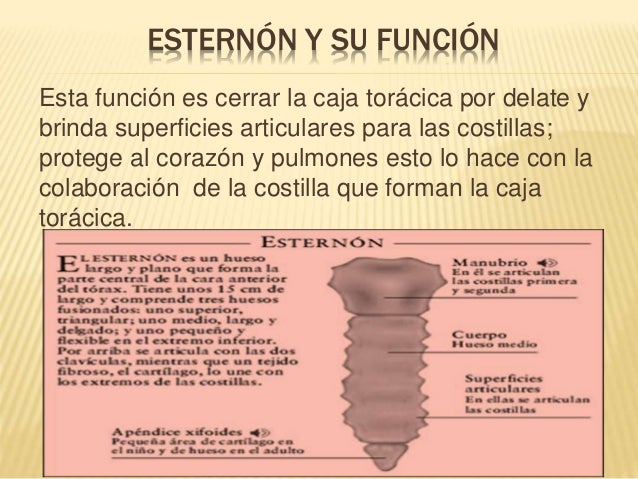 Anatom A Y Morfolog A De La Caja Tor Cica