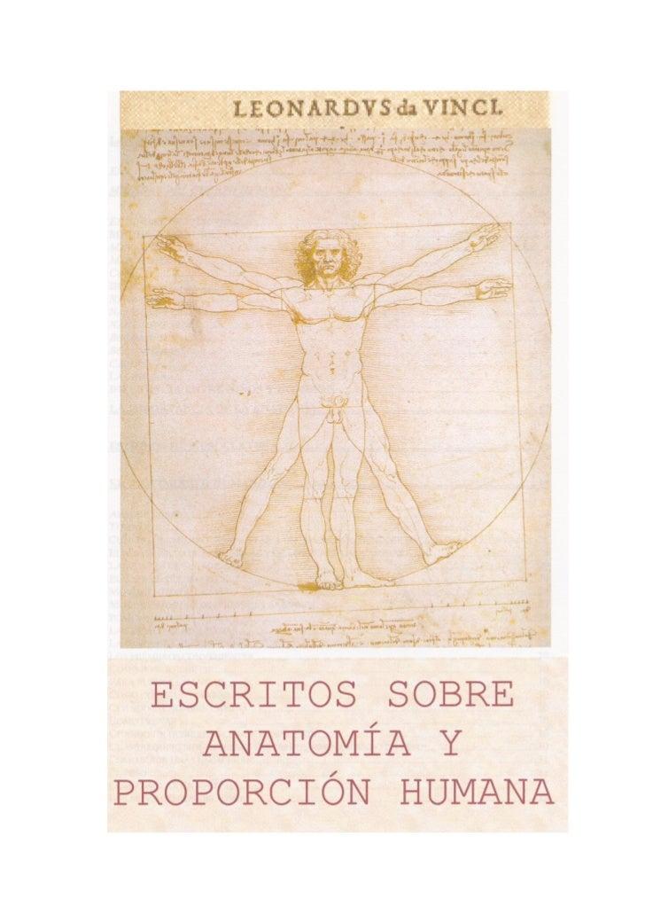 Anatomía y proporción humana