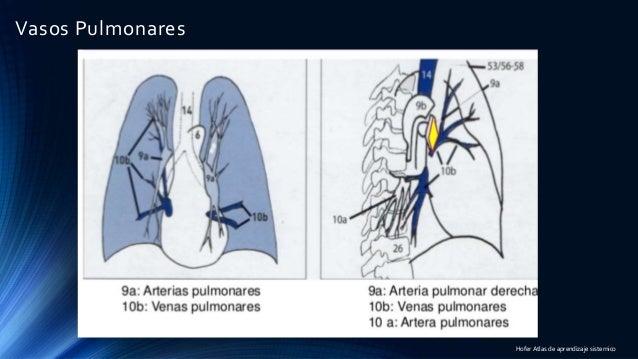 Anatomía y radiología torácica