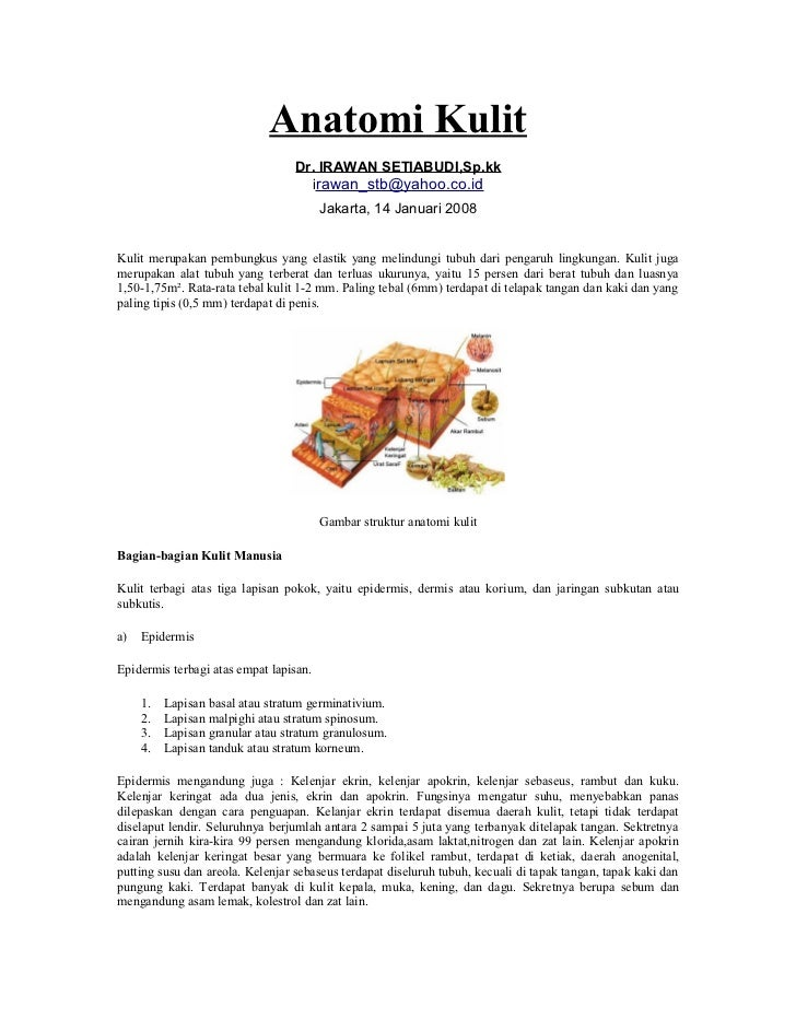 Anatomi Kulit                                   Dr. IRAWAN SETIABUDI,Sp.kk                                     irawan_stb@...
