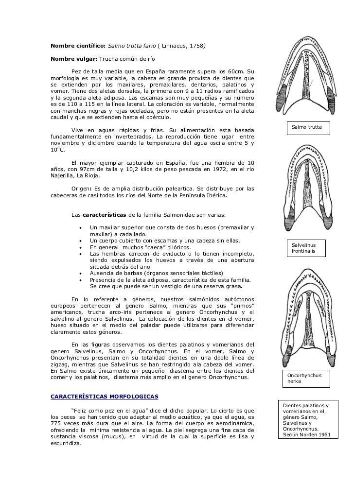 Lujo Anatomía De Una Corriente Embellecimiento - Imágenes de ...