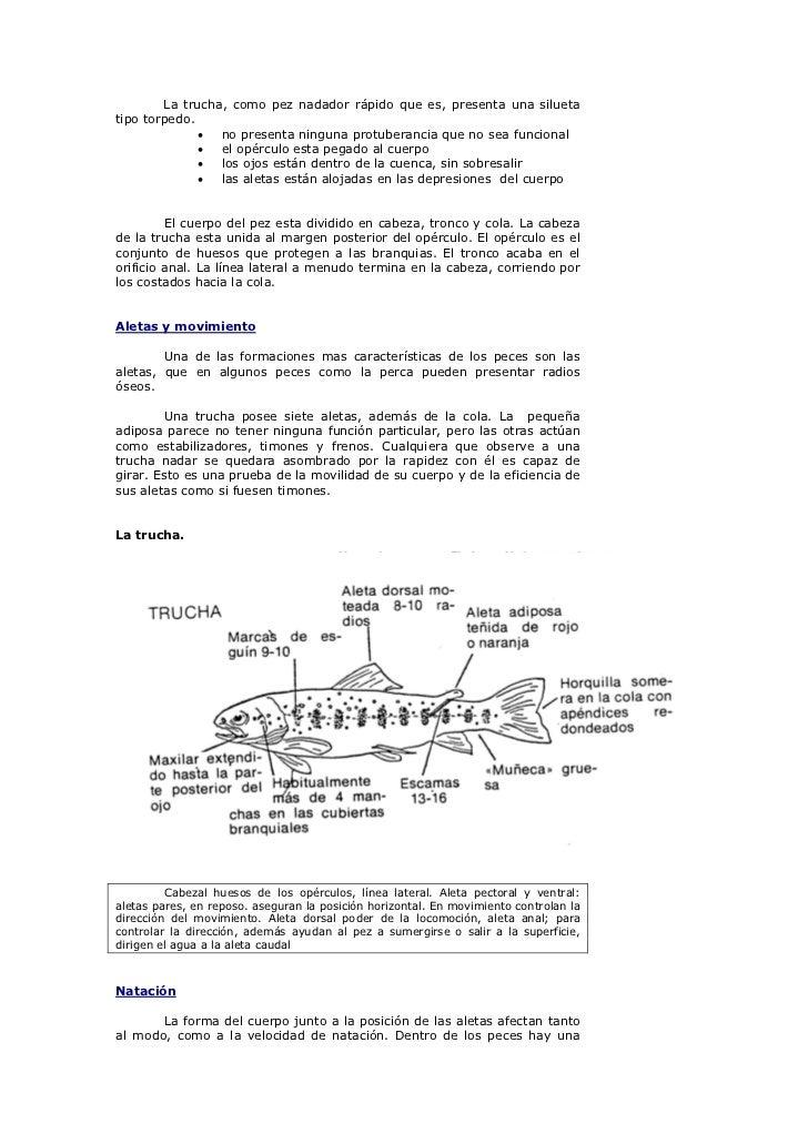 Increíble Arco Iris De La Anatomía De La Trucha Ideas - Anatomía de ...