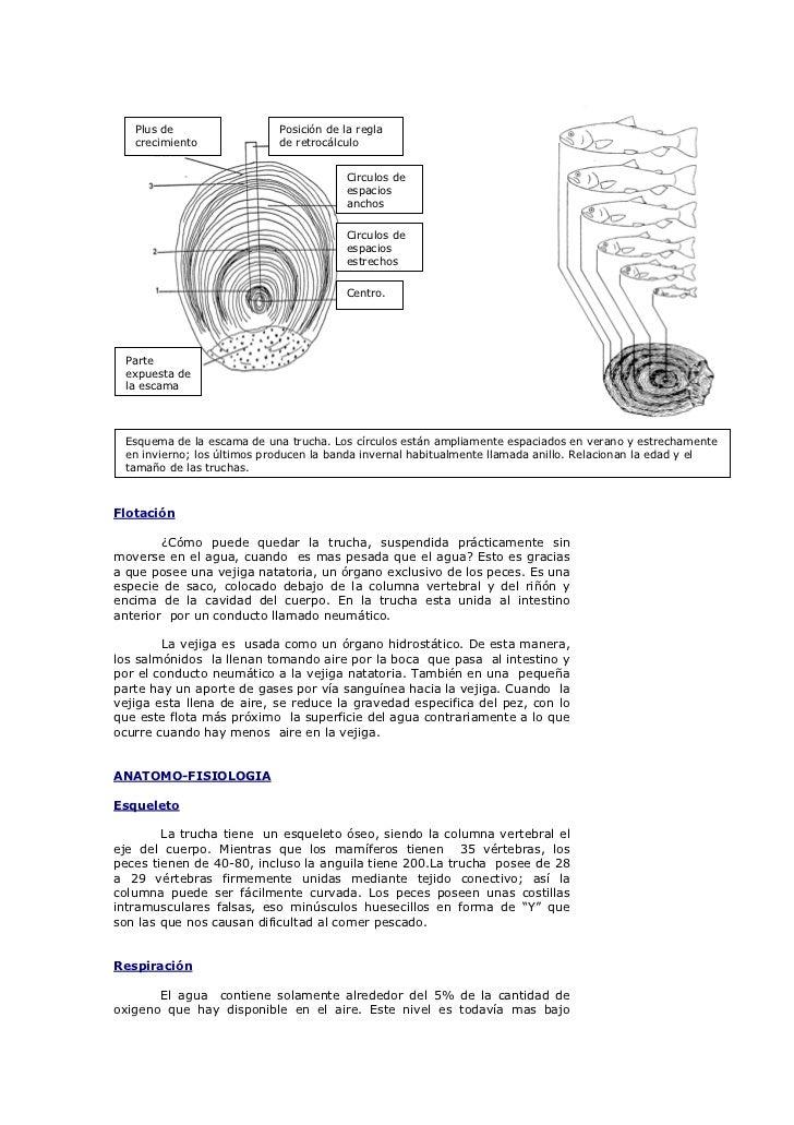 ANATOMIA Y FISIOLOGIA DE LA TRUCHA