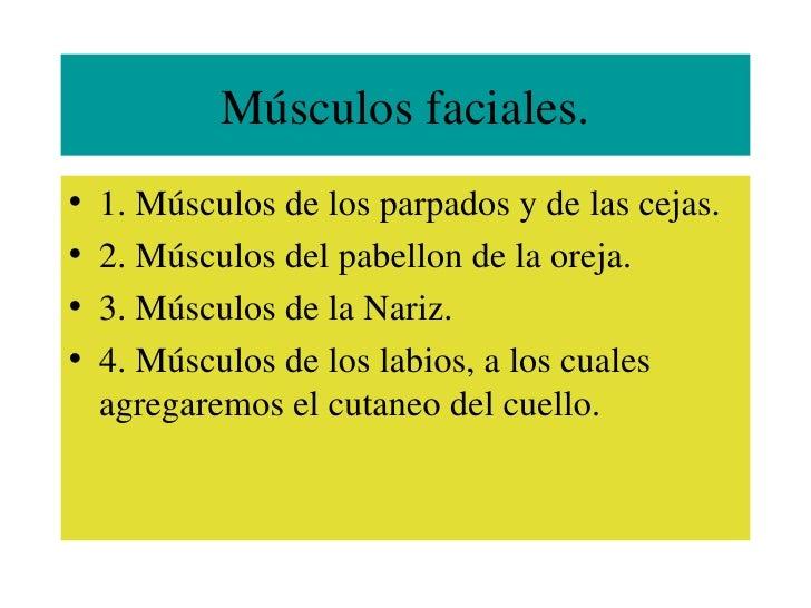 Músculos faciales. <ul><li>1. Músculos de los parpados y de las cejas. </li></ul><ul><li>2. Músculos del pabellon de la or...