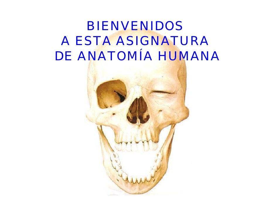 BIENVENIDOS  A ESTA ASIGNATURA DE ANATOMÍA HUMANA
