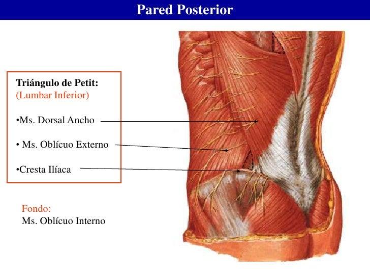 Anatomia MIR
