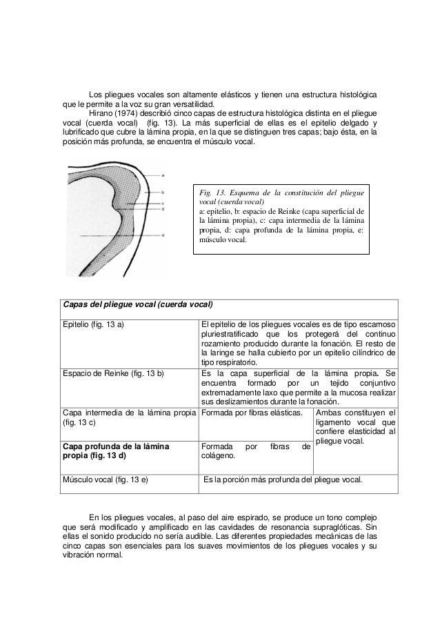 Bonito Cuerdas Vocales Anatomía Cresta - Imágenes de Anatomía Humana ...