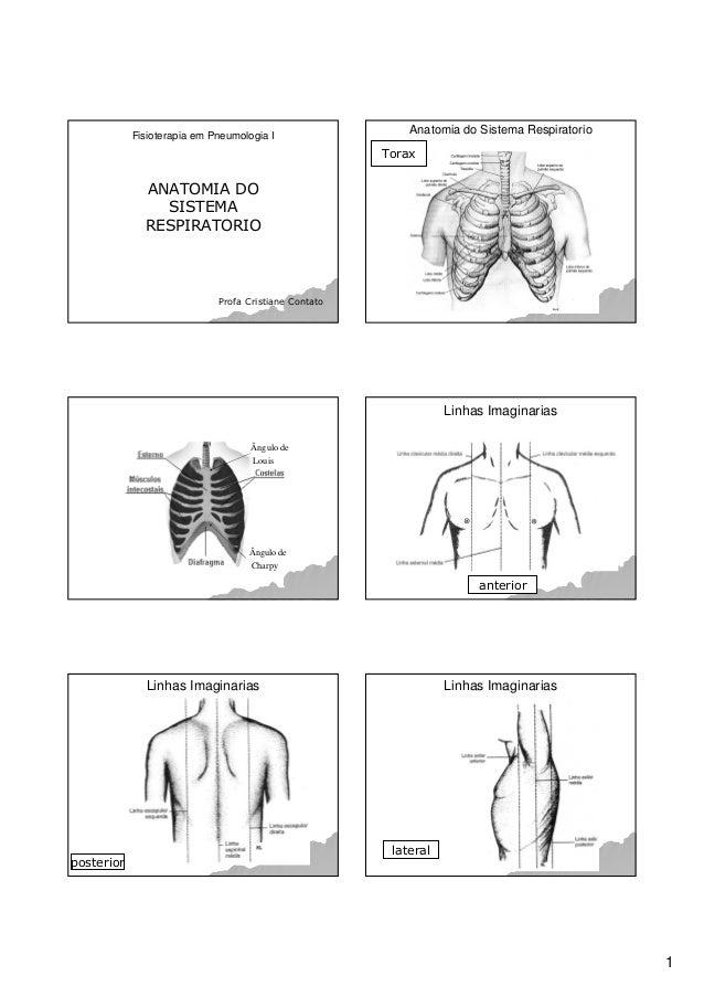 1 Fisioterapia em Pneumologia I ANATOMIA DO SISTEMA RESPIRATORIO Profa Cristiane Contato Anatomia do Sistema Respiratorio ...