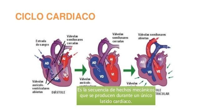 anatomia-del-sistema-cardiovascular-22-638.jpg?cb=1386705089