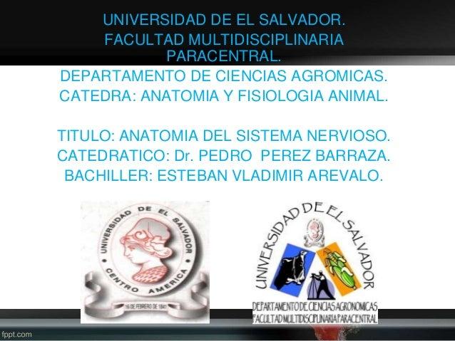 UNIVERSIDAD DE EL SALVADOR. FACULTAD MULTIDISCIPLINARIA PARACENTRAL. DEPARTAMENTO DE CIENCIAS AGROMICAS. CATEDRA: ANATOMIA...