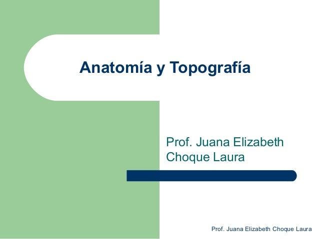 Anatomía y Topografía Prof. Juana Elizabeth Choque Laura Prof. Juana Elizabeth Choque Laura