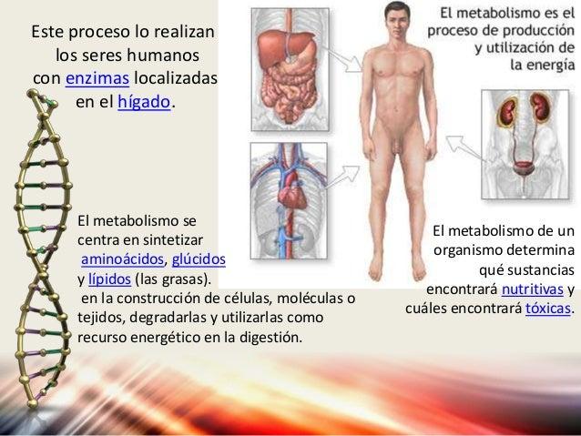 Procesos Vitales, PRINCIPIOS DE ANATOMIA