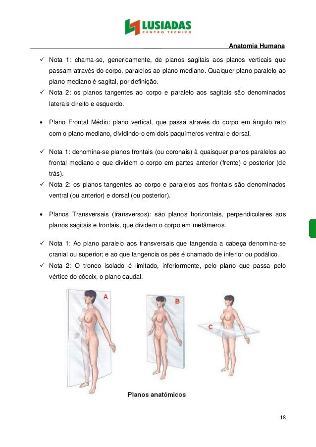 Lujoso Anatomía Y Fisiología Humanas Notas Patrón - Imágenes de ...