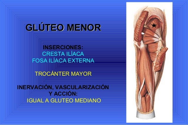 Anatomia. miembro inferior miología y angiología