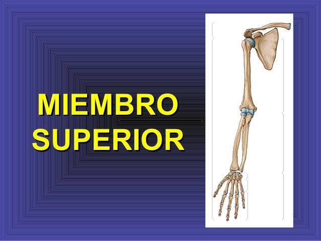 Anatomia. miembro superior osteo articular