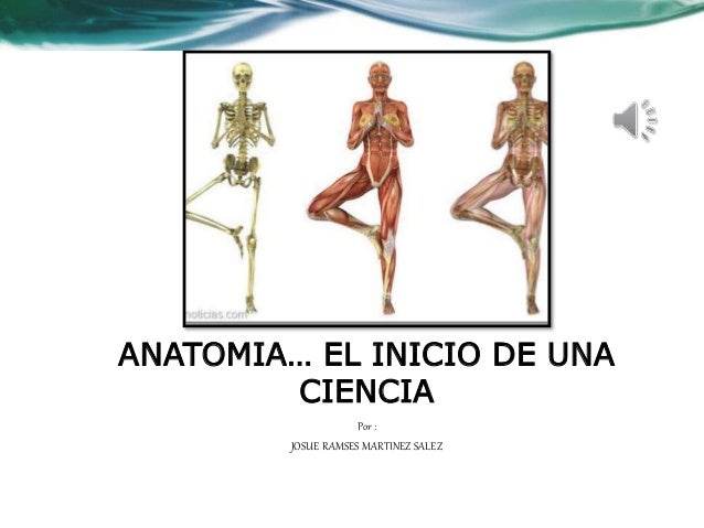 Único Uniformes Grises Anatomía Bosquejo - Anatomía y Fisiología del ...