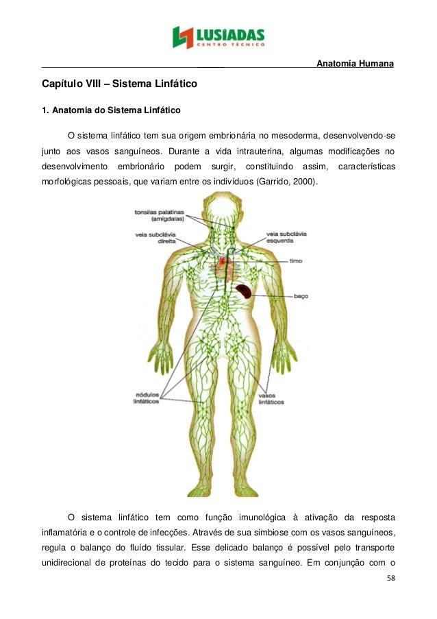Atractivo Anatomía Humana Y Fisiología Del Sistema Linfático ...