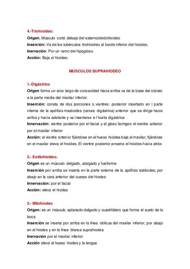 Fantástico Ranura En La Anatomía Colección de Imágenes - Imágenes de ...