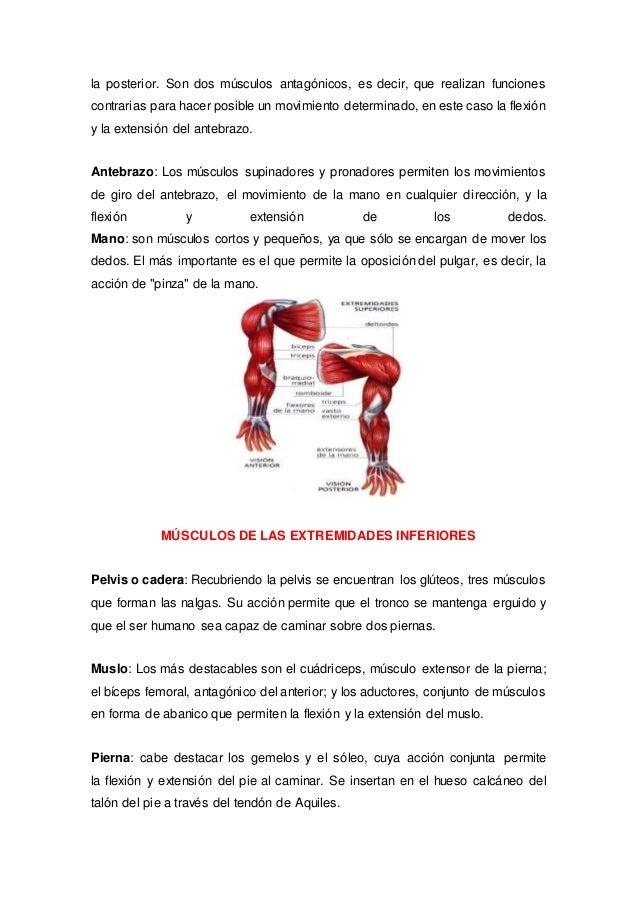Anatomia .....