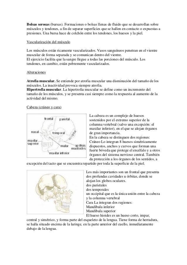 Bonito Cómo Define La Anatomía Regalo - Imágenes de Anatomía Humana ...