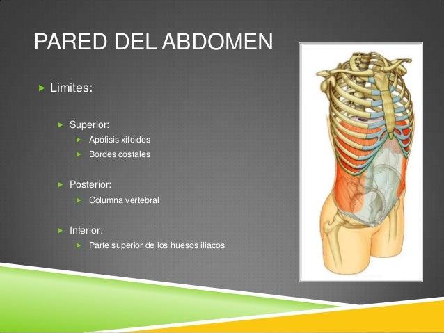 PARED DEL ABDOMEN  Capas:  Piel  Tejido subcutáneo  Músculos y sus fascias profundas  Fascia extraperitoneal  Perito...