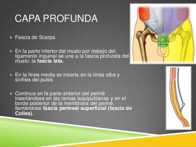 MÚSCULOS ANTEROLATERALES  Cinco músculos:  3 PLANOS:  Oblicuo externo  Oblicuo interno  Transverso del abdomen  2 VE...