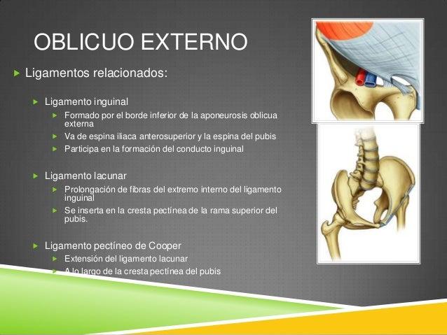 OBLICUO INTERNO  Fibras en dirección superointerna  Origen: fascia toracolumbar, cresta iliaca, 2/3 laterales del ligame...