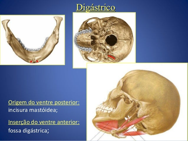 Anatomia Do Pesco O