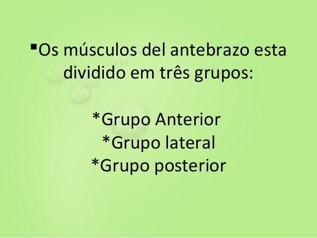 Anatomia ..(3) Slide 2