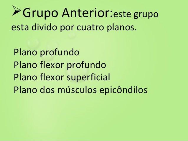Anatomia ..(3) Slide 3