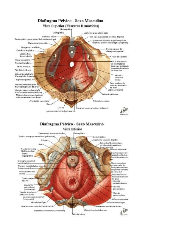 Anatomia   anatomia para o yoga