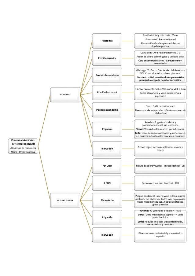 Anatomía Humana: Resumen Óganos Abdominales